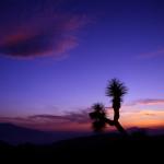 Joshua Tree N.P.-California-03-1999-Paul HAAN