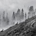 Fotograf Marc-Steichen