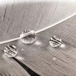 Wasserperlen auf einer Feder